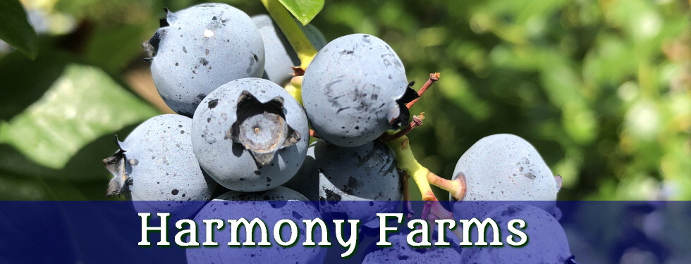 Harmony Farms | 387 Saw Mill Road | North Scituate, RI 02857 | (401) 934-0741